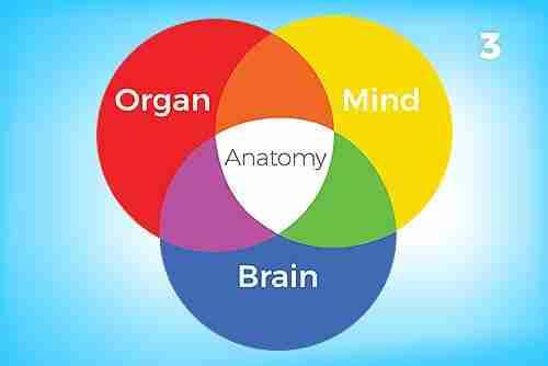 Organ-Mind-Brain Anatomy